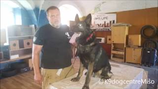 Personal Protection Dog - Training