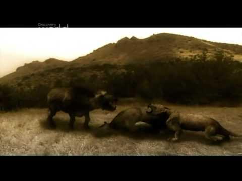 Prehistoryczne B Niedźwiedziopies 4 Część 1
