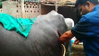 Dr. Ne Bhains ki operation se delivery ki