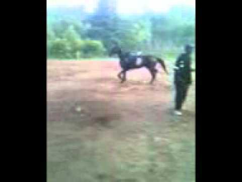 Xxx Mp4 Horse Training 3gp 3gp Sex