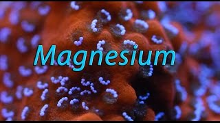 Quick Chemistry: What is the Role of Magnesium in Reef Aquariums?
