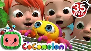 Itsy Bitsy Spider | +More Nursery Rhymes & Kids Songs - CoCoMelon