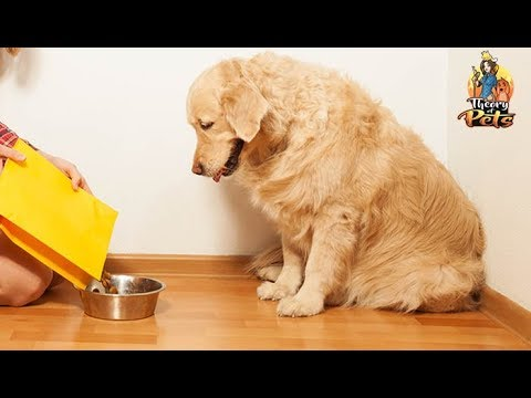 TOP #68: The 411 On Functional Ingredients in Dog Food