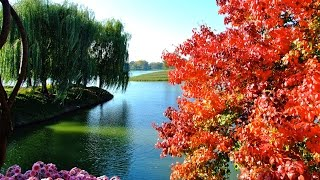 Chicago Botanic Garden - Fall