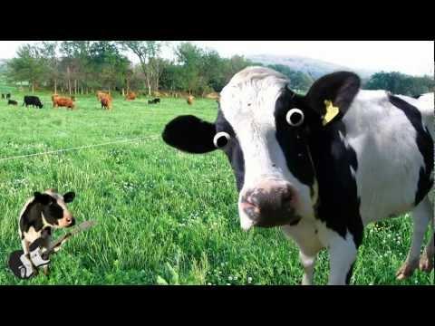 Xxx Mp4 I M A Cow Song 3gp Sex