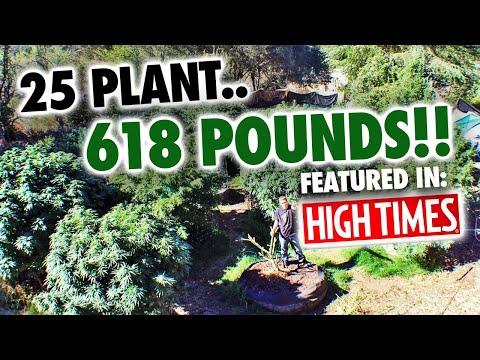 25 Plant 618 lb. Mendo Dope Marijuana Garden featured in High Times Magazine.