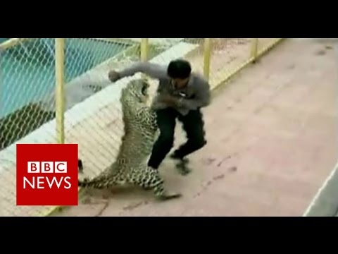 Leopard on the loose injures six while prowling around school in India BBC News