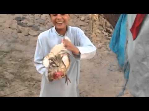 Xxx Mp4 Pashto Song 3gp Sex