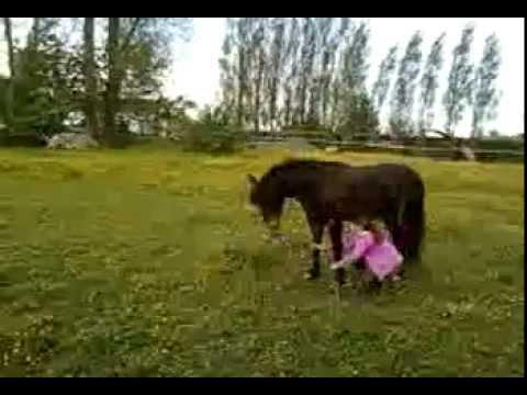 Bref j'était avec un cheval