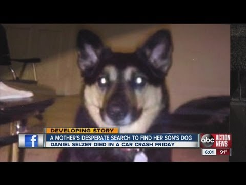 A mother's desperate search to find her son's dog