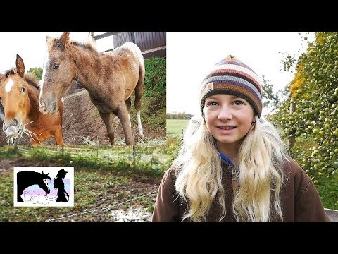 Barn Vlog | Horses Chickens Pigs Goats and Cows