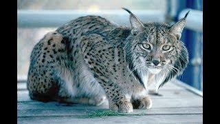 Endangered Species of 2016, Close to Extinction        Top 10 Endangered Species