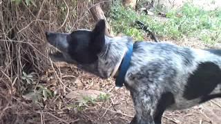 Dog vs Electric fence