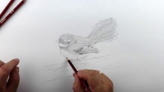 How to paint a realistic fantail. Part 6 - Tone the bird