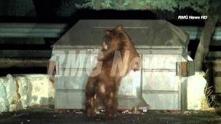 A mother bear tries to save its cub after it becomes trapped in a dumpster, Azusa, California.
