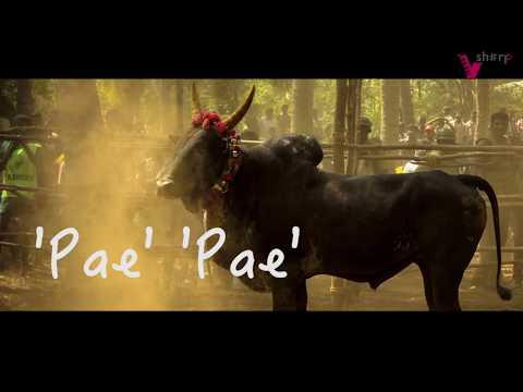 Xxx Mp4 Vaa Maa Minnal Vandhudichu PONGAL SPECIAL Song 2018 Pongal Anthem By Vsharp 3gp Sex