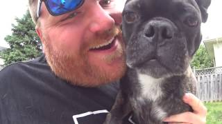 Boston Terrier Pug Mix Review