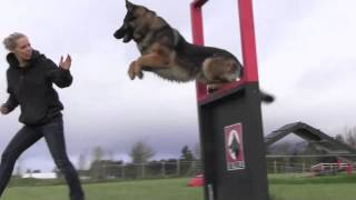 Obedience IPO Trained Versatility German Shepherd