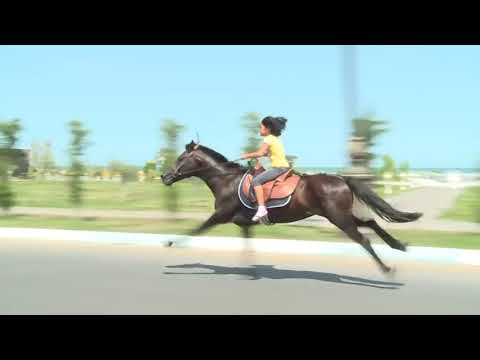 Xxx Mp4 Super Lady HORSE Riding Horse Game Fast Horse Riding 3gp Sex