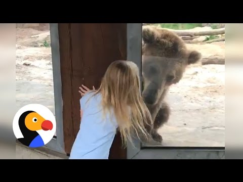 Xxx Mp4 Bear Plays Peekaboo With Girl At Zoo The Dodo 3gp Sex