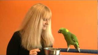 Parrot Training Tip - Motivating Your Parrot