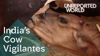 India's Hindu vigilantes killing to protect cows | Unreported World
