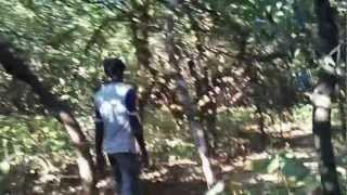 Chandoli National Park..
