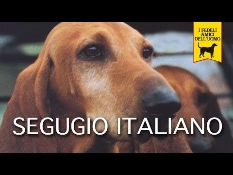 SEGUGIO ITALIANO trailer documentario