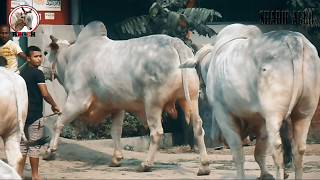 The Biggest Shibbi | Nabab & Sultan Part 02 | JJKH | Sharif Agro 2017 | RBGCH 😎