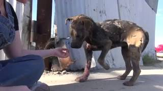 Rescuing Bethany a sick, homeless dogn 39 s inspiring transformation Please share)[www savevid com]