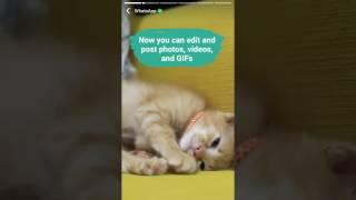 How to use WhatsApp Status