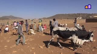 Ethiopia - Axum Cattle Market