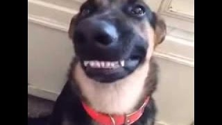 Hilarious Guilty Dogs Compilation 2016!