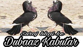SURAJ P MHATRE BHAI KE DUBAAZ KABUTAR ..DOMBAVALI MUMBAI part 2