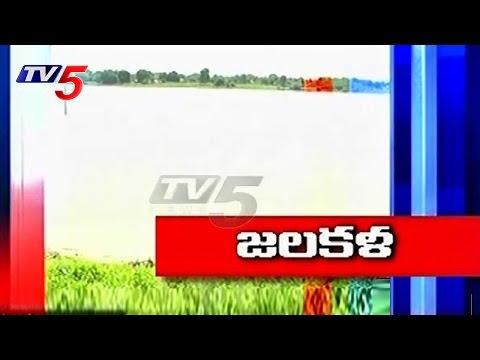 Xxx Mp4 Farmers Happy On Mission Kakatiya Works In Warangal TV5 News 3gp Sex
