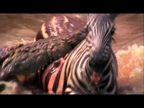 Download Deadly Instinct Crocodiles free