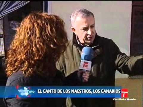 CLM en Vivo . El canto de los canarios
