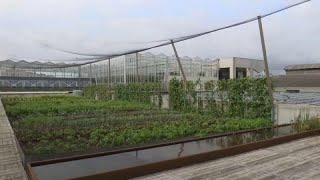 Haute cuisine: rooftop farming initiative sprouts in Brussels