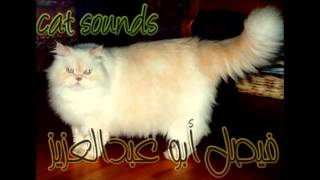 cat sounds - صوت القطط