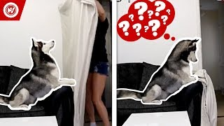 Dogs React To Getting PRANKED!   What The Fluff Challenge Compilation