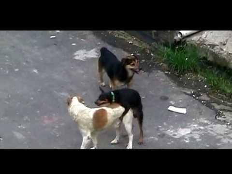 Xxx Mp4 GAYS DOGS CACHORROS BAITOLAS Video Premiado No Festival De Cannes Kkkkkk 3gp Sex