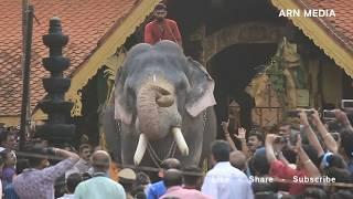 Thirunakkara Pakal Pooram 2018 - Kerala Elephants