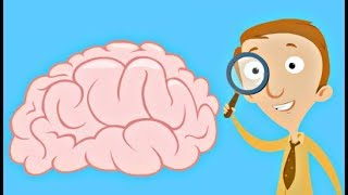 Human Brain Facts for Kids   Structure and Function Video