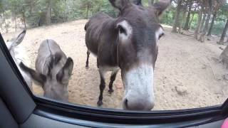 Franklin Safari Drive Thru Park