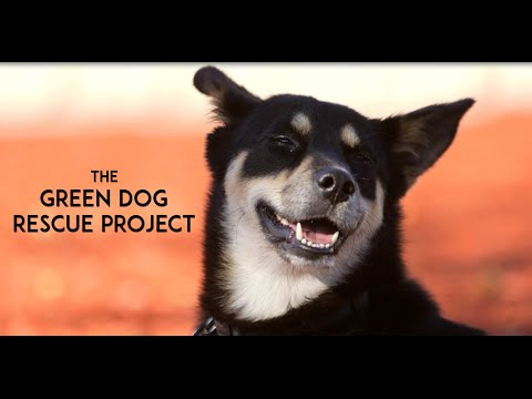 The Story of Green Dog
