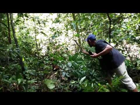 Waooo!!! Penemuan ULAR BESAR di MALUKU (Pulau Seram)