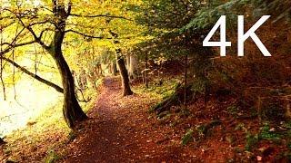 Ultra HD Video: SEPTEMBER FOREST WALK