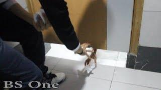 شاهد فضيحة شاب مغربي في مرحاض عمومي - مقلب الغائط في اليد