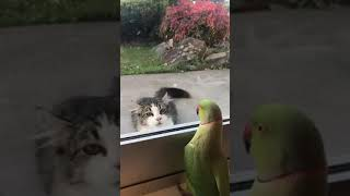 Parrot playing peekaboo with the cat from across the street