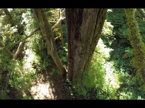 Save the Central Walbran Valley Drone Footage Canada s Grandest Ancient Forest at Risk